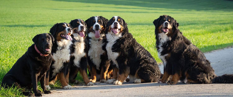 Hunde-Urlaubsbetreuung on tour