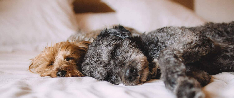 Familiäre Hundepension